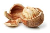 Sušené lískové oříšky — Stock fotografie