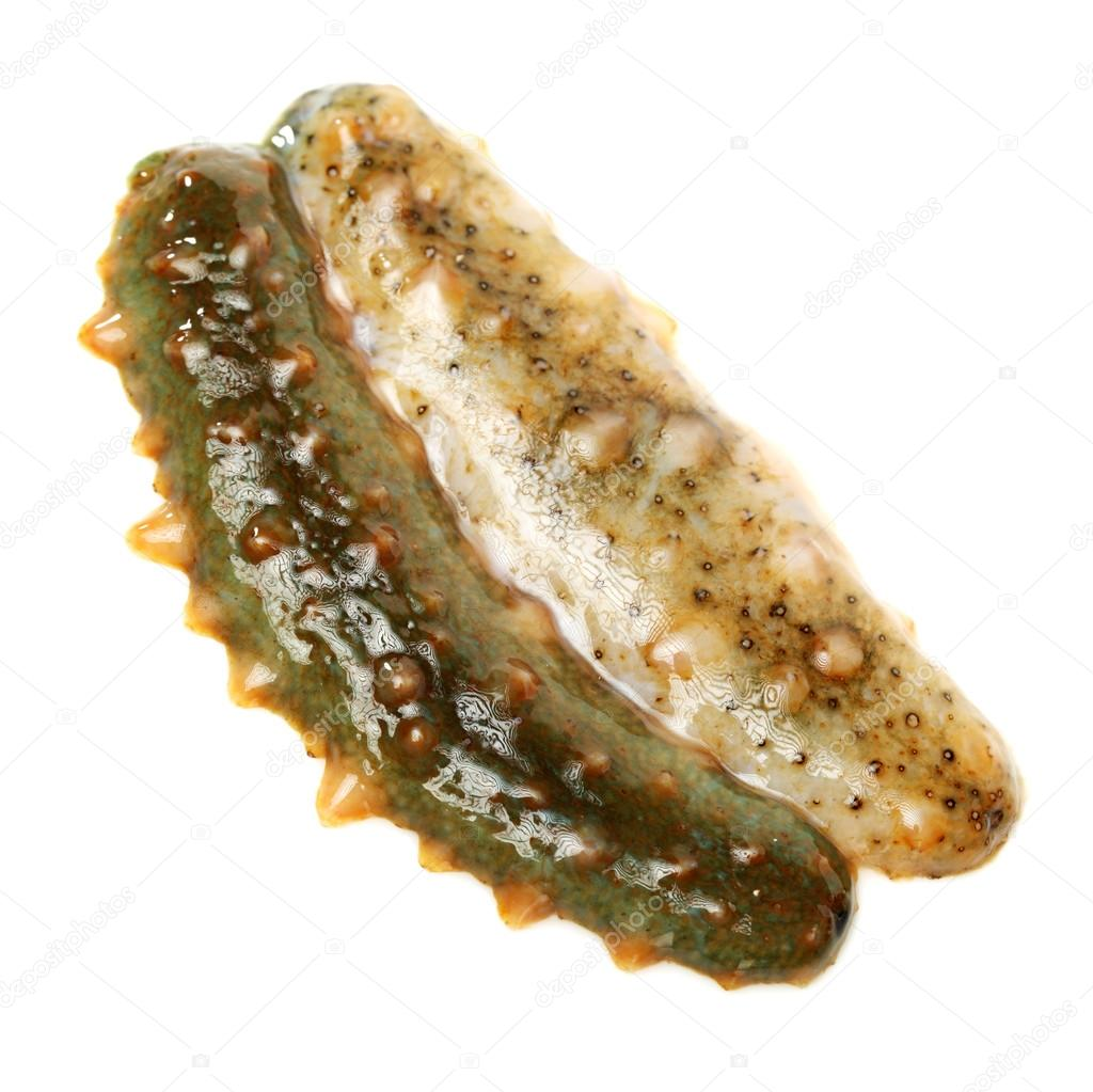 sea cucumber essay Sea cucumber condition and trepang industry sea cucumber condition and trepanned industry in the get a custom essay sample written according to your.