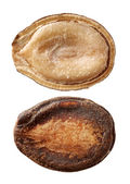 Kavun tohumu — Stok fotoğraf