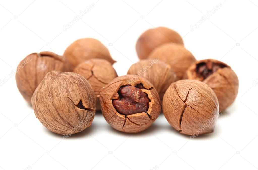 Hickory Nuts Stock Photos, Pictures, Royalty Free Hickory Nuts ...