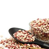 Phaseolus vulgaris beans — Stock Photo