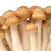 Three  mushrooms — 图库照片