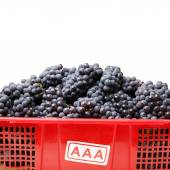 Ripe dark grapes — Stock Photo
