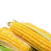 Head of yellow maize — Stock Photo