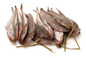 Fresh flathead fish — Stock Photo