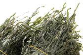 Green seaweed on white — Stock Photo