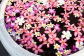 Flower in bowl — Стоковое фото