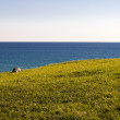 Grass and sea. — Stock Photo #57862157