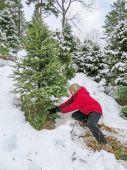 Adult Woman Sawing Fir Tree For Christimas Holiday — Stock Photo
