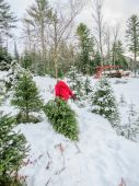 Mature Adult Woman Drags Cut Christmas Tree Through Snow — Stock Photo