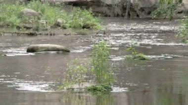 спокойный вид воды из потока 7q fs700 одиссея — Стоковое видео