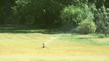 Um aspersor de grama, colocando um pouco de água sobre a grama bermuda fs700 odisséia 7q — Vídeo Stock