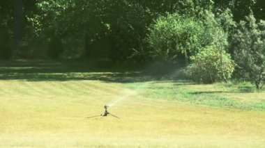 A grass sprinkler putting some water on the bermuda grass FS700 Odyssey 7Q — Stock Video