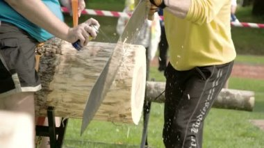 Two men are trying to cut the big log with the saw — Stock Video
