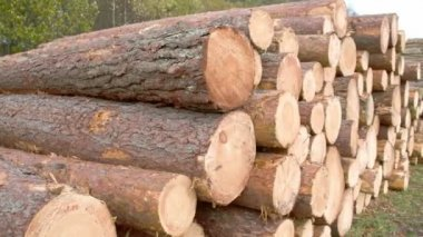 Heaps of logs from the cut spruce trees FS700 4K — Stock Video