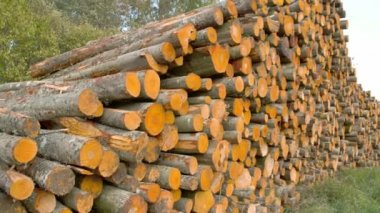 Tall heaps of the Grey Alder logs ready for transport FS700 4K — Stock Video