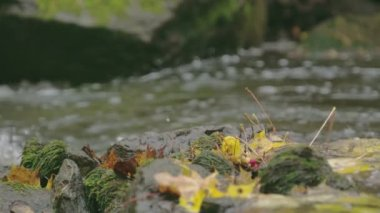 Closer look of the maple leaves and the river FS700 4K — Stock Video