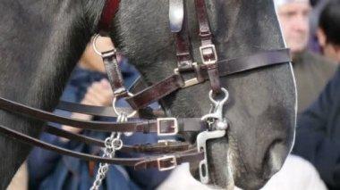 Stäng upp tittar av hästen av slotten — Stockvideo