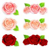 Set of roses with green leaves — Stock Vector