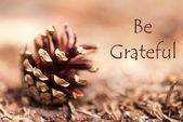 Fir Cone with Be Grateful — Stock Photo