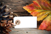 Banner with Copy Space and Autumn Decoration — Stock Photo
