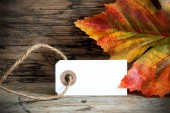 Background with Empty Label and Autumnal Decoration — Stock Photo