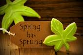 Brown Organic Label With English Text Spring Has Sprung — Stock Photo