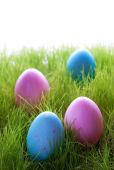 Many Pink And Blue Easter Eggs On Green Grass — Stock Photo
