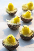 Many Yellow Easter Chicks In Baskets or Nest — Stock Photo