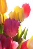 Close Up Of Sunny Tulip Bouquet Or Flower Meadow — Stock Photo