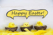 Three Chicks With Comic Speech Balloon Happy Easter And Feathers — Stock Photo