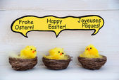 Three Chicks With Comic Speech Balloon With German French And English Happy Easter — Stock fotografie