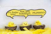Three Easter Chicks With Comic Speech Balloon Telling A Joke — Stock Photo