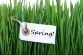 Green Grass With Label With Spring — Stock Photo
