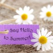 Purple Label With Life Quote Say Hello To Summer And Marguerite Blossoms — Stock Photo #66208915
