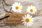 Brown Label With Hello Summer And Marguerite Blossoms — Stock Photo