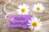Purple Label With Hello Summer And Marguerite Blossoms — Stock Photo