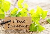 Brown Label With Hello Summer And Green Branches — Stock Photo