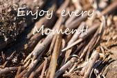 Bamboo Background Enjoy Every Moment — Stock Photo