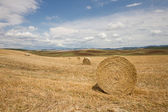 Tuscan landscape in Val d'Orcia (Siena, Italy) — Stock Photo
