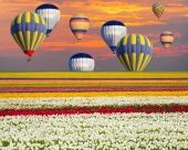 Field of tulips against hot air balloons — Stock Photo