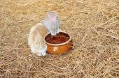 Fluffy rabbits feeding near bowl of water — Stock Photo