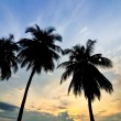 Palm trees with beautiful sunrise — Stock Photo #56689685