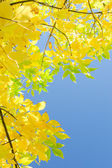 Vertical autumn background with yellow foliage over blue sky — Stock Photo