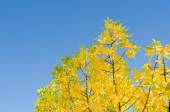 Autumn background with golden lush foliage — Stock Photo