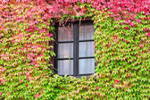 Window in an old traditional European country house — 图库照片