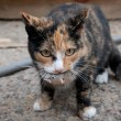 The cat caught a mouse — Stock Photo #60251247