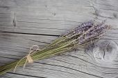 Bunch of dry lavender flowers — Stock Photo