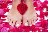 Beautiful woman's legs with red rose petals — Stock Photo