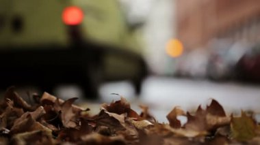 Leaves on the street - autumnal urban scene, traffic and cars — Stock Video
